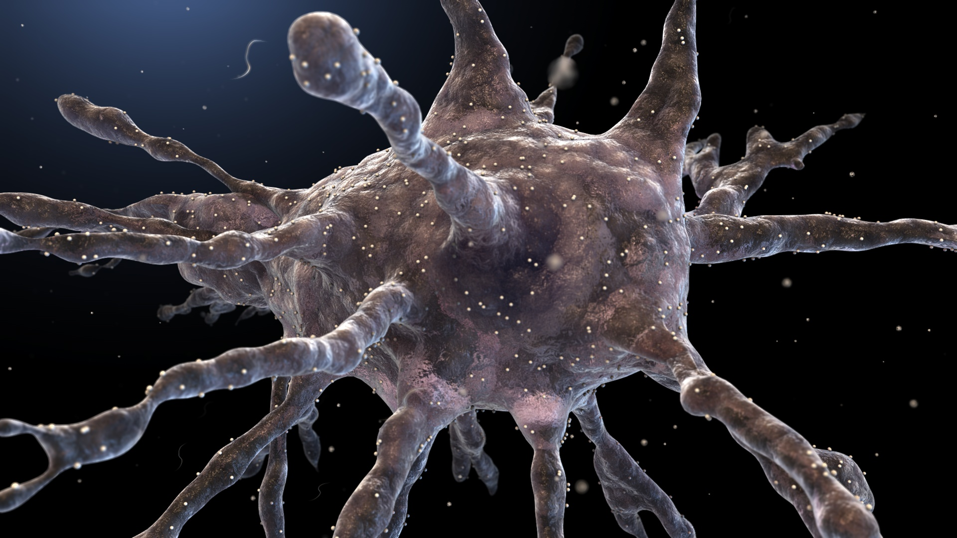 Image result for dendritic cells under microscope